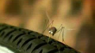 minuscule Power rocket mosquito