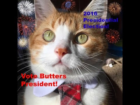 2016 Presidential Campaign - Cat For President