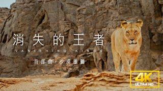 《4K SDR》 消失的王者 首部曲:沙漠雄獅【聚焦全世界】|舒夢蘭 Vanishing Kings I  Lions of the Namib Desert