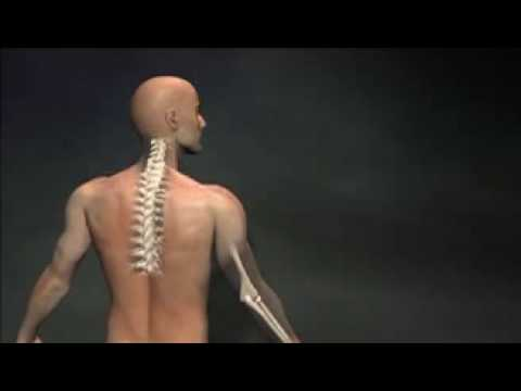 yoga therapy for back pain  youtube
