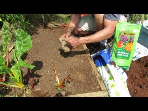 1 of 3: Planting Radishes/Preparing the Soil and Seed Spacing: My 1st Vegetable Garden - MFG