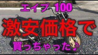 エイプ100  掘り出し物発見‼︎  春だから勢いでバイク買っちゃった♪   [ホブちゃんねる]