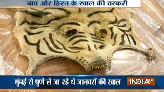 Pune: Two Held For Trading In Animals Skin