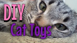 testing cat toys
