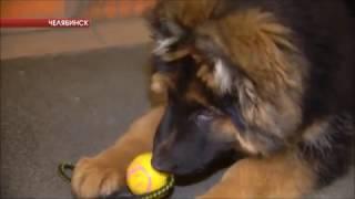 Городской службе спасения подарили щенка немецкой овчарки