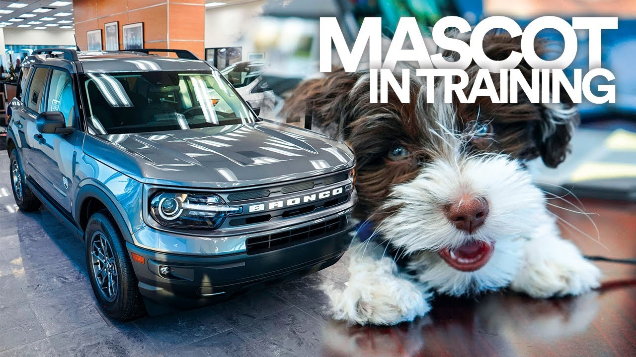 Cute Puppy Commercial We Want To Buy Your Car Grand Ledge Ford Youtube