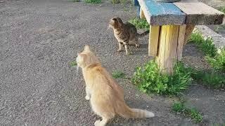 Котячий движ. Прикол