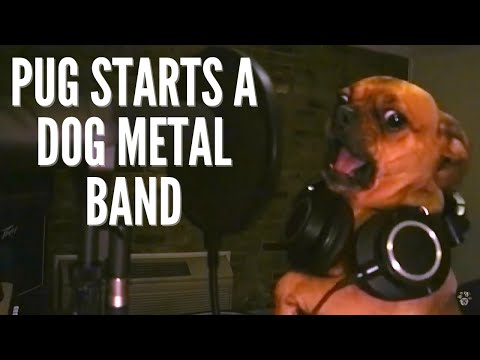 Rock Out with this Dog METAL Band