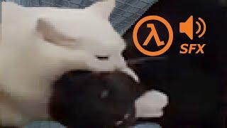 hl cats escape the freezer | HalfLife SFX