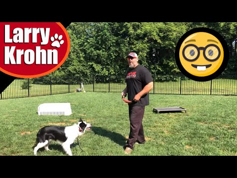Training and Playing with the SMARTEST dog breed / Discussion on timing of markers and rewards