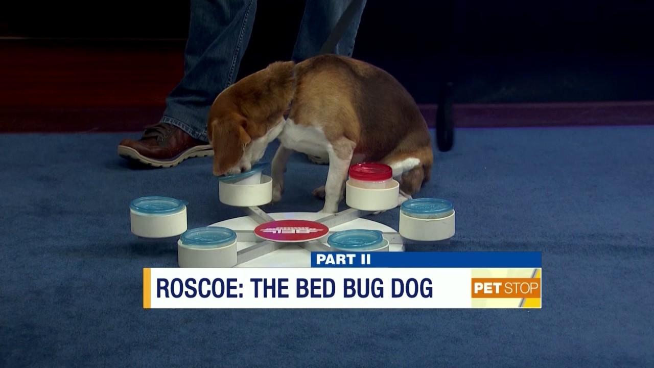 where's roscoe? he's on news 12-nj's pet stop (february 18, 2017