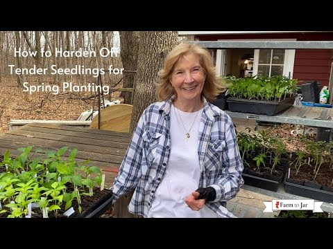 Hardening off tomato & tender vegetable plants for Spring