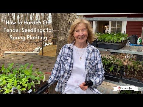 Hardening off tomato & tender vegetable plants for Spring