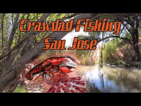 Crawdad Fishing In San Jose