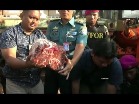 Penyelundupan Daging Ilegal dari Australia Digagalkan