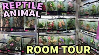 Reptile & Animal ROOM TOUR 2020 - 80+ Animals! - CatAleah