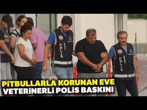 Adana'da Pitbullarla Korunan Şato Gibi Eve Veterinerli Polis Baskını