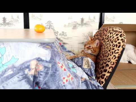 こたつで座椅子 Cat and kotatsu 2017#1 170109