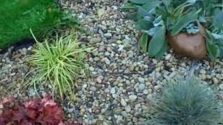 видео Хосты в ландшафтном дизайне: фото с идеями оформления клумб, рокариев и альпинариев в саду