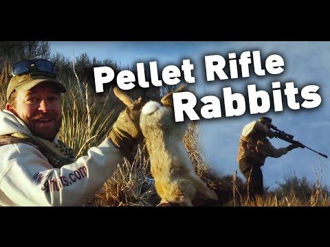 Break Barrel Air Rifle Air Gun Hunting For Rabbit : American Airgunner