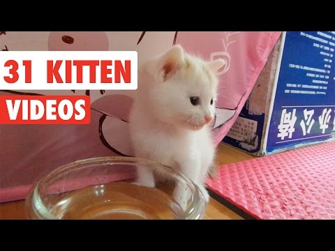 31 Funny Kittens | Cat Video Compilation 2017