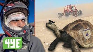 las vegas desert tortoise could send you to prison