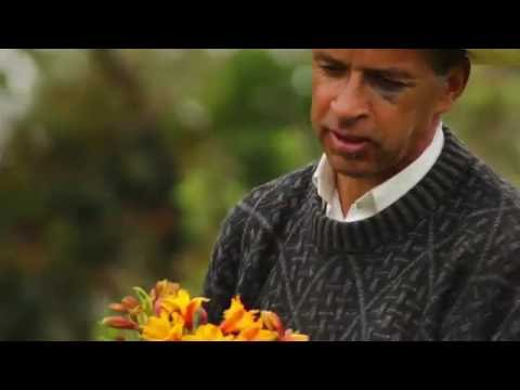 A Day in the Life of a Flower Grower in Medellín Colombia -