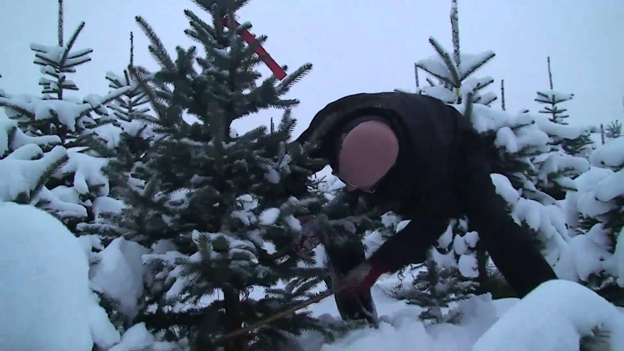 tannenbaum zum ausschneiden  malvorlagen tannenbaum