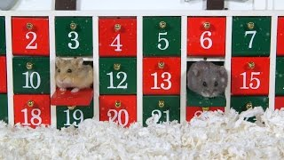 Day 1: Advent Calendar - Cute Hamsters: 12 Days of Christmas