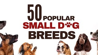 50 MOST POPULAR SMALL DOG BREEDS  | BEST DOGS