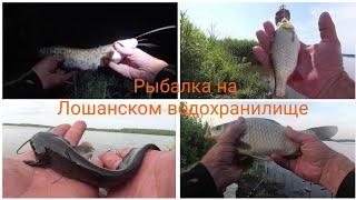 Да ну нафиг Вместо карася СОМ на удочку Лошанское водохранилище Рыбалка в Беларуси в жару