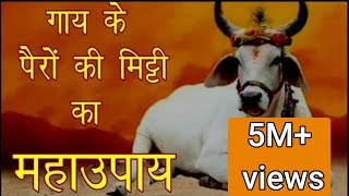 गाय के पैरों की मिट्टी का महाउपाय#LalKitab Astrology