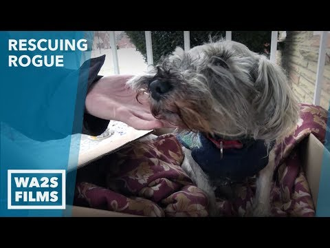 We Went To RESCUE A Shivering COLD Abandoned DOG And Saved WILFRED! Ep #23 Rescuing Rogue in Detroit