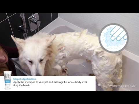 FRONTLINE Pet Care UK - How to shampoo your dog ?
