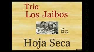 Trío Los Jaibos: Hoja Seca - (letra y acordes)