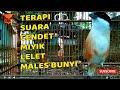 Cendet Lelet Miyik Males Bunyi Dan Bisu Bakal Gacor Dengan Terapy Suara Cendet  Mp3 - Mp4 Download