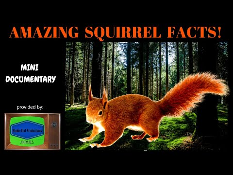 Squirrel Facts Mini Documentary HD