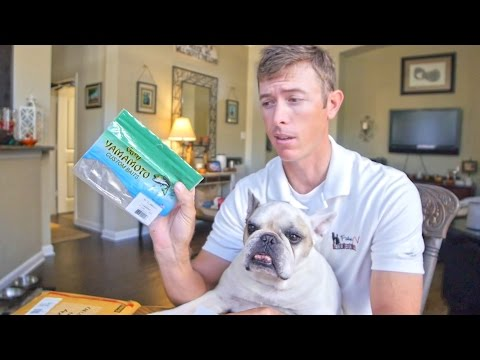 Secret Fall Fishing Lure Color Unboxing with Winston the Bulldog
