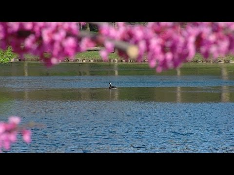 Postcard from Campus: Spring Fever