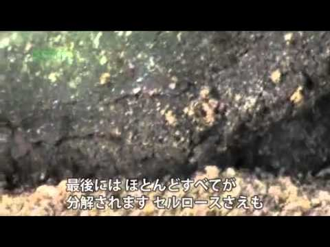 グリーン革命〜バイオマス編