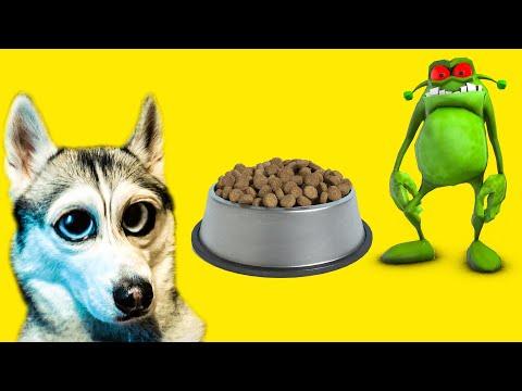Вопрос: Хелп Собака Хаски, делать прививку или нет?