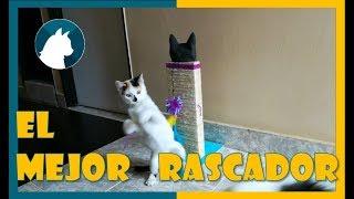 🐈 Rascador Para gatos Casero fácil 🐾 Paso a Paso 😺