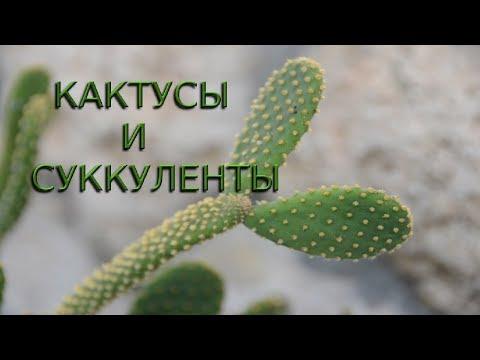 Вопрос: Какой ежегодный прирост у кактусов разных видов?