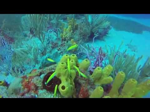 Diving double wreck & anchor point - Sint Eustatius