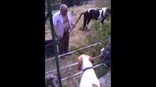 Un chien se prend un coup de jus