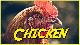 Chicken - Epic NPC Man ( Skyrim / Zelda / MMO Video Game Logic) | Viva La Dirt League (VLDL)