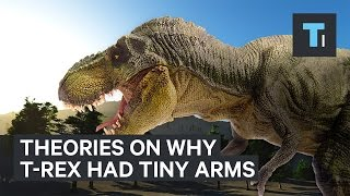 Why the Tyrannosaurus Rex had such tiny arms