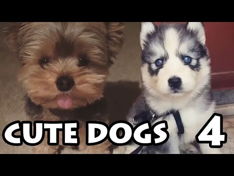 Cute Dog Videos Ep. 4 | Try Not to Cuddle Compilation 2019
