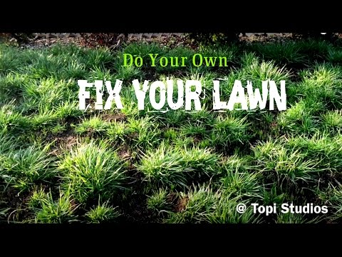 How to fix your lawn grass [Dead Grass]