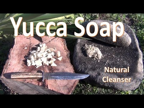 How to Make Yucca Soap (Primitive)